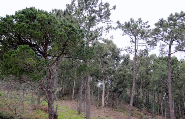 San Roque Mount