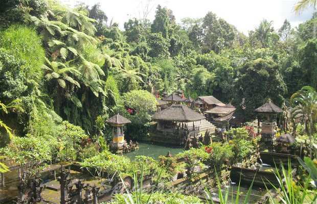 Campos de Arroz de Ubud - Tegallalang