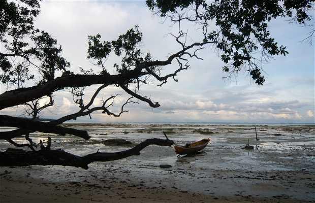 Isola Havelock