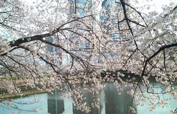 Parque Sakuranomiya