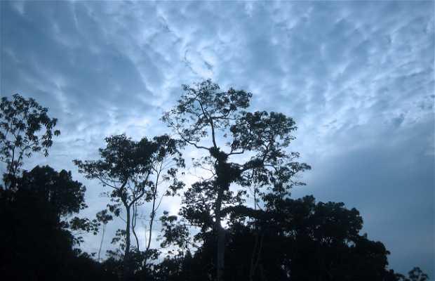 Avistamiento de Aves en la Amazonía Peruana