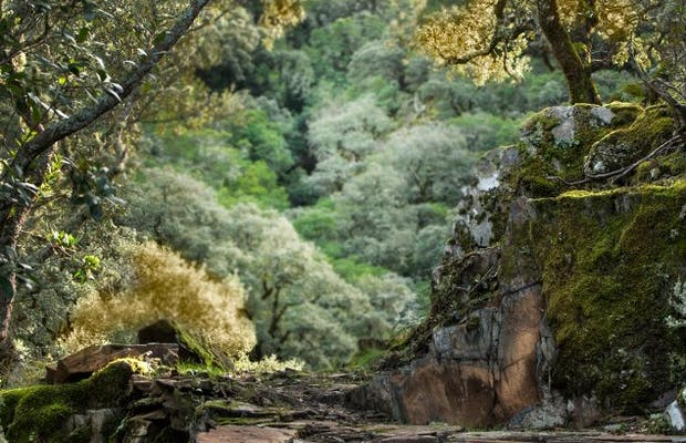 Tejos del Cerezal
