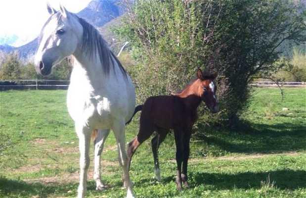 Centro Equestre Cuadras El Arriel