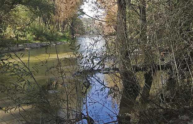 El Rio Del Pardo