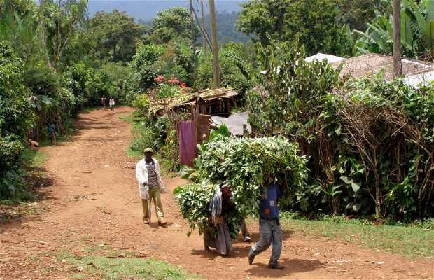 El camino entre Shashemene y el lago Langano