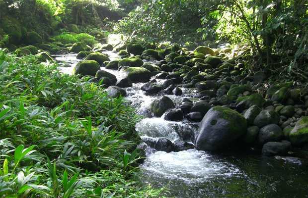 Rio Danta