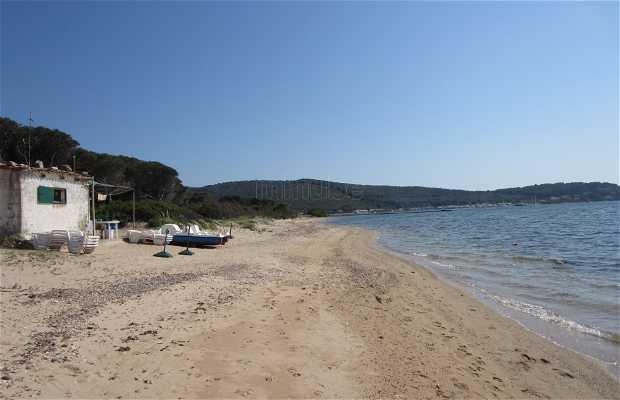 Playa Pineta Mugoni