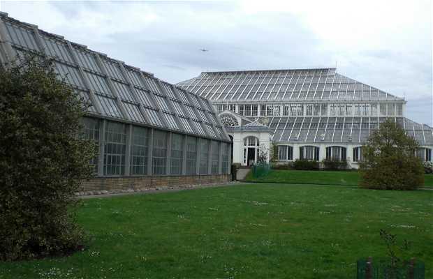 Invernaderos de Kew
