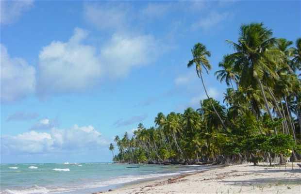 Plages du littoral au sud de pernambuco