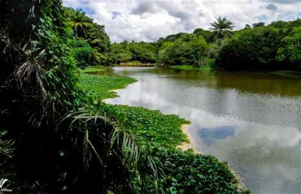 Camino de la Reserva de Sapiranga