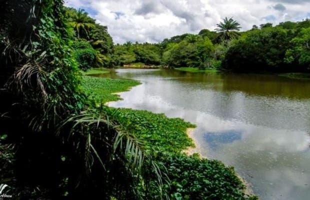 Trilha da Reserva de Sapiranga