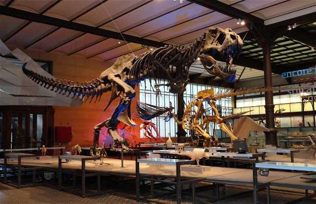 Museo Scienze Naturali
