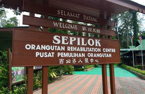 Centro de recuperación de orangutanes