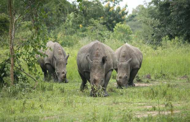 Santuario de rinocerontes Ziwa - Ziwa Rhino Sanctuary
