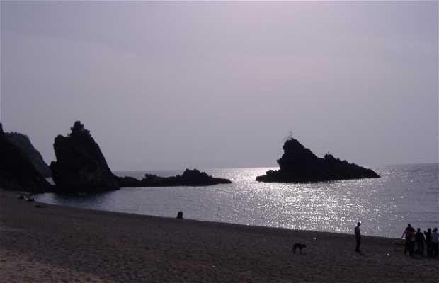 Costa Viola