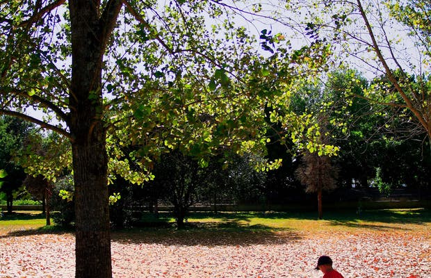 El Parque