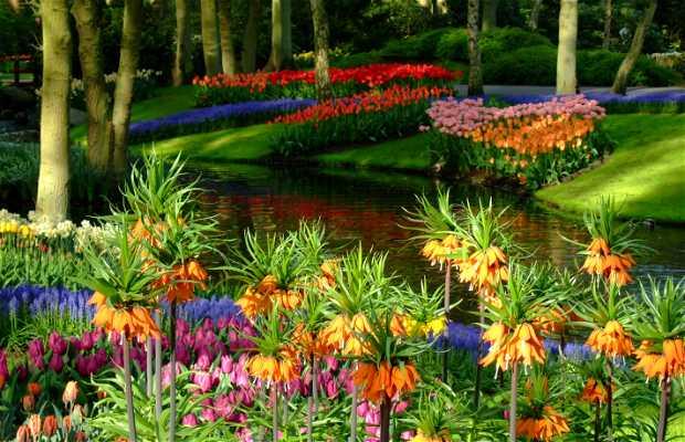 Jardines keukehnof en lisse 30 opiniones y 614 fotos - Jardines de tulipanes en holanda ...