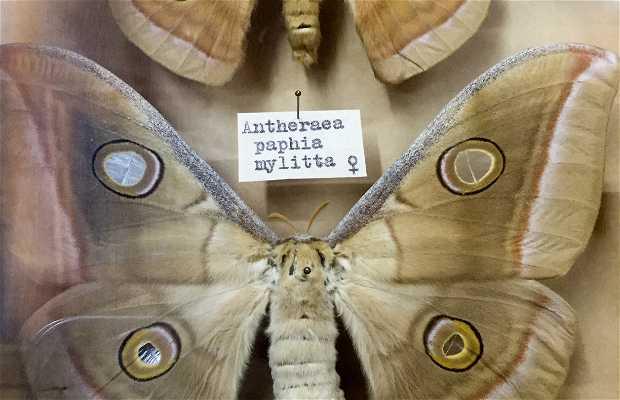 Museu Entomológico Dr. Fritz Plaumann
