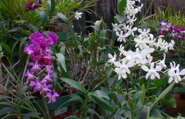 Orchids garden