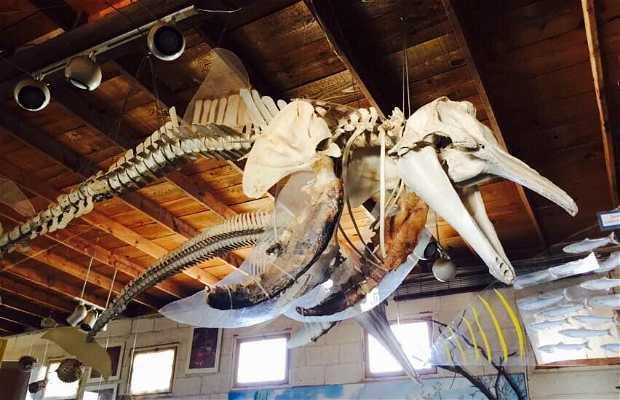 Museo Naturaleza y Cultura de Bahía de Los Ángeles