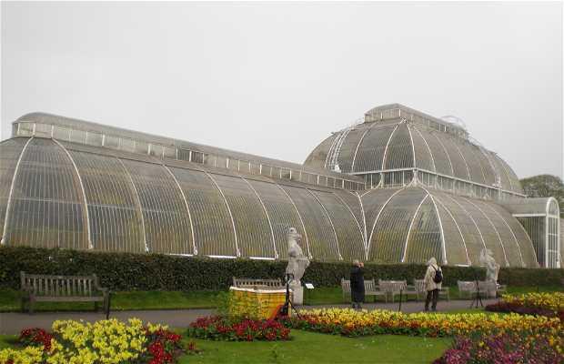 Historia de Kew