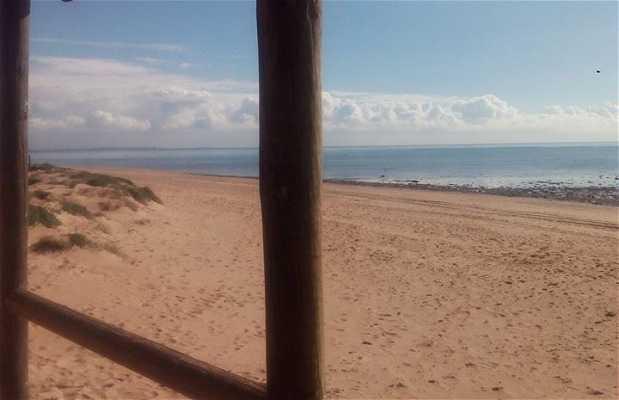 Pinares Playas de Rota