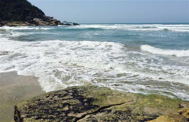 Playa de los Pinheiros