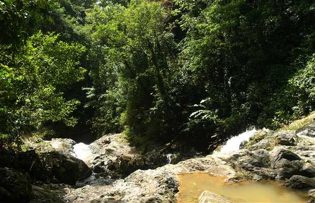 Cascada Argyle