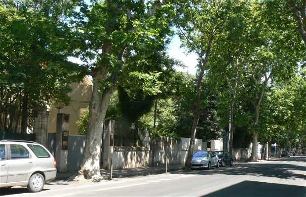 Avenue Bouisson Bertrand
