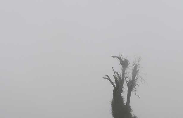Nieblas del Irazú