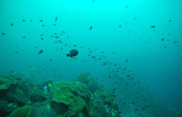 Ihasia Diving Koh Tao