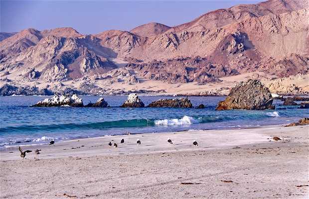 Playa las Tortolas, Taltal Chile