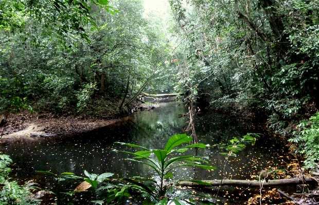 Cameroonian Jungle