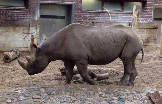 Zoo de Berlín