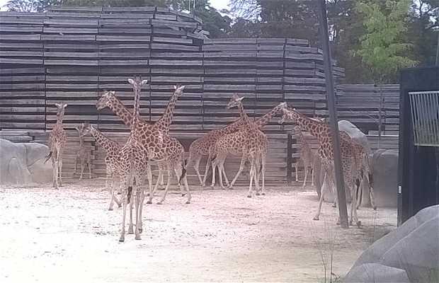 Parc zoologique de vincennes