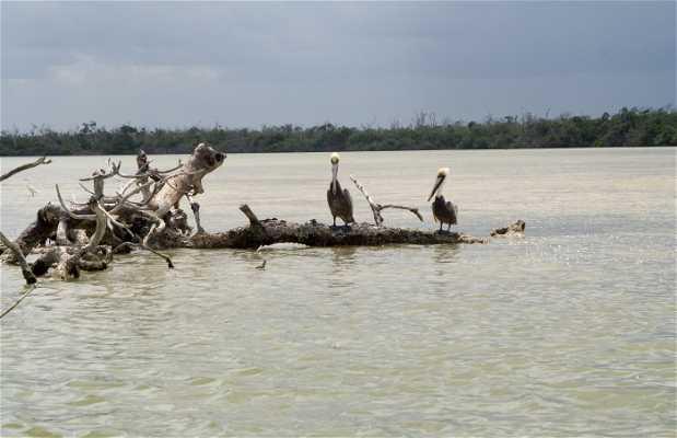 Natural reserve Rio Lagartos