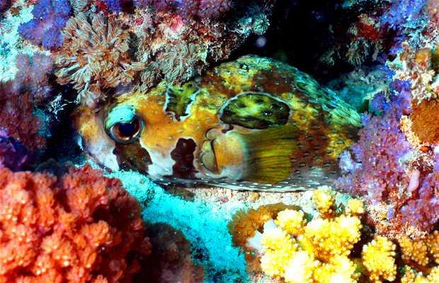 Mergulho no Wattabomi de Zanzibar