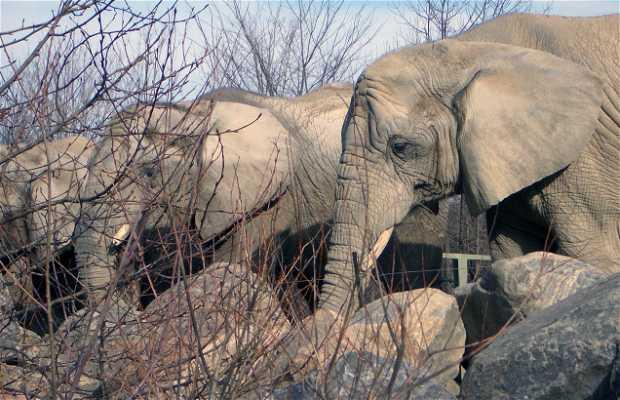 Zoológico de Toronto