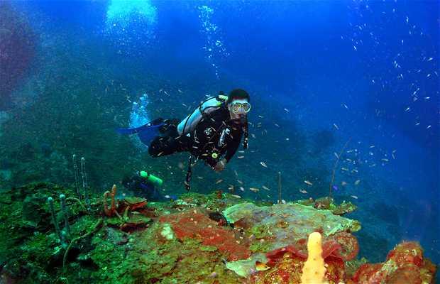 Buceo en Los Cayos Zapotillos o Sapodilla Cays