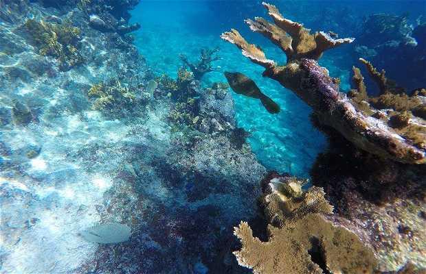Antillas Diving