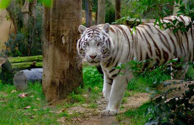 Jard n zool gico en lisboa 7 opiniones y 79 fotos for Jardin zoologico de la habana