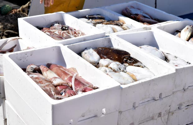 Lonja puerto pesquero Estepona