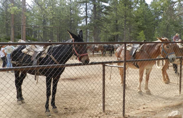 Bryce Canyon Ranch