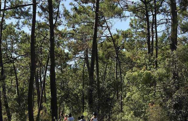 Forêt de Saint Jean de Monts