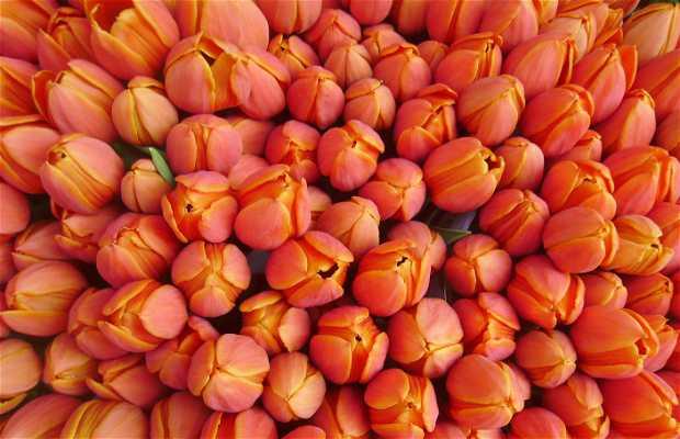 Bloemenmarkt - Mercado de las flores