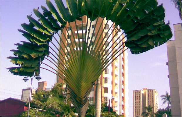 Parque las Palmas