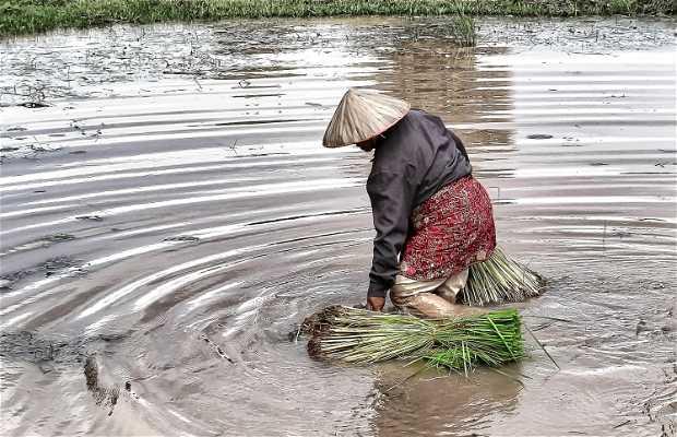 Alrededores de Battambang