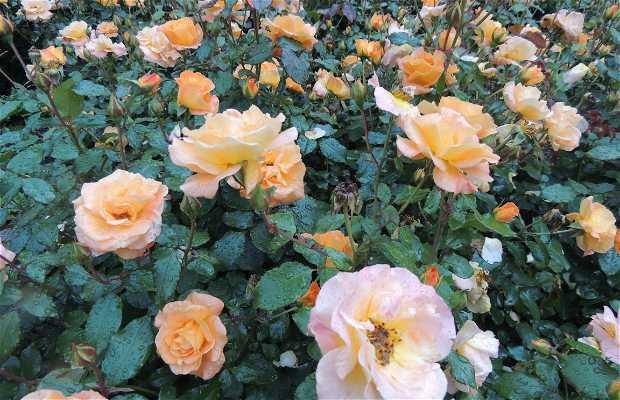 Jardín de las Rosas