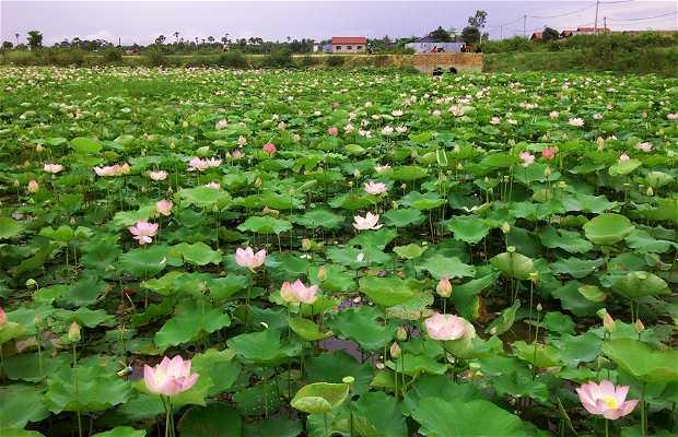 Lotus Garden (Cambodia)