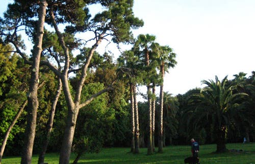 Bosque de Capodimonte